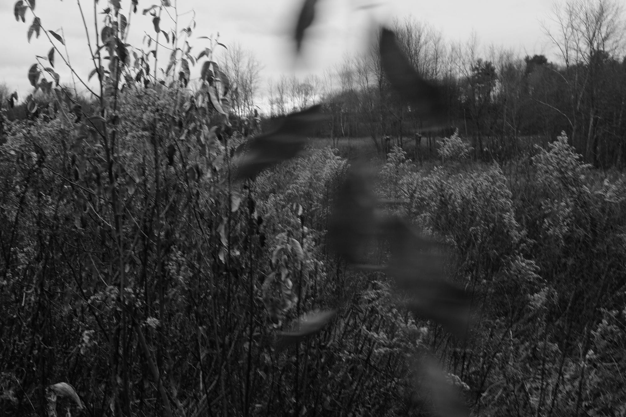 amherstfields-54.jpg