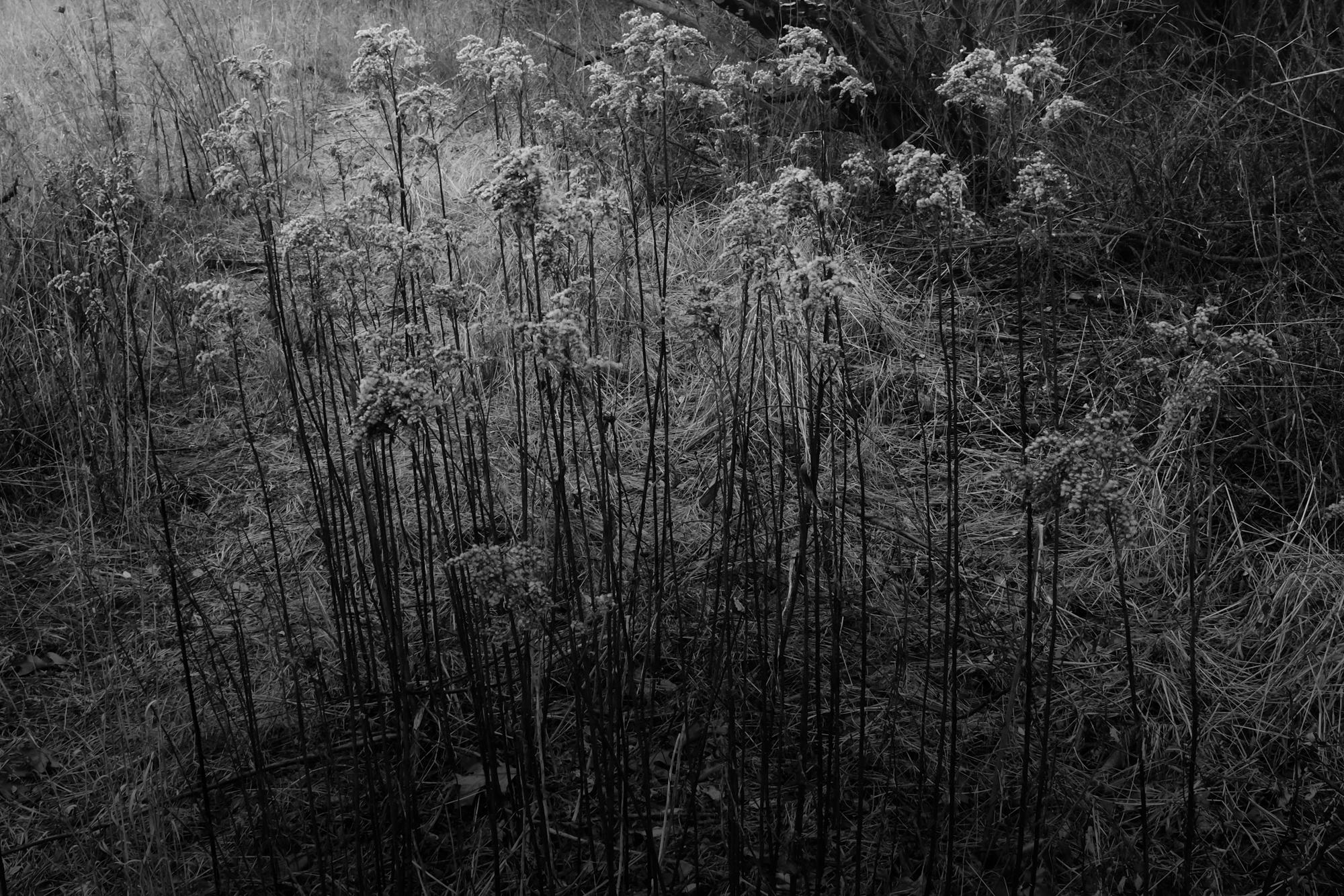 amherstfields-40.jpg