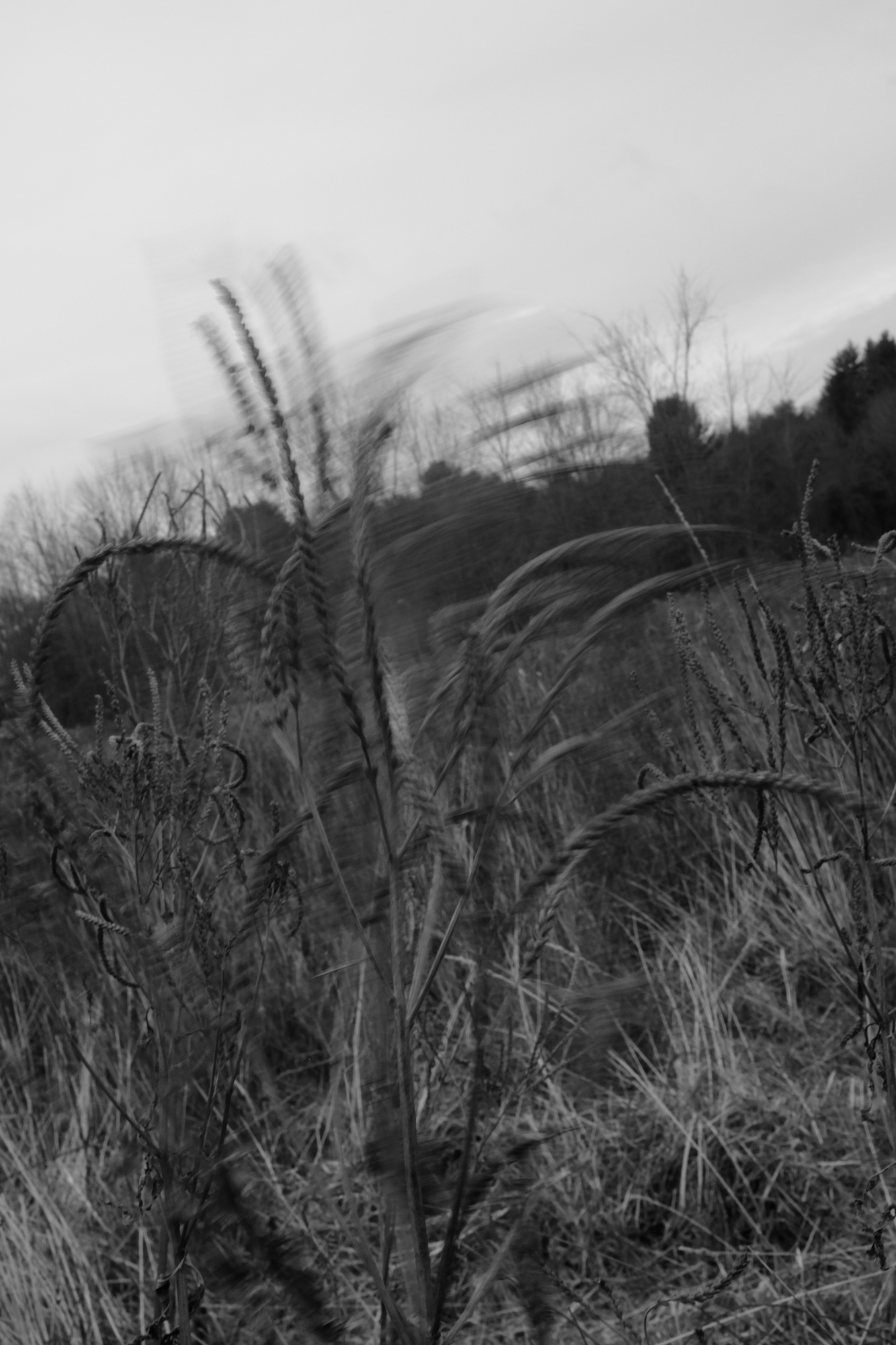 amherstfields-41.jpg