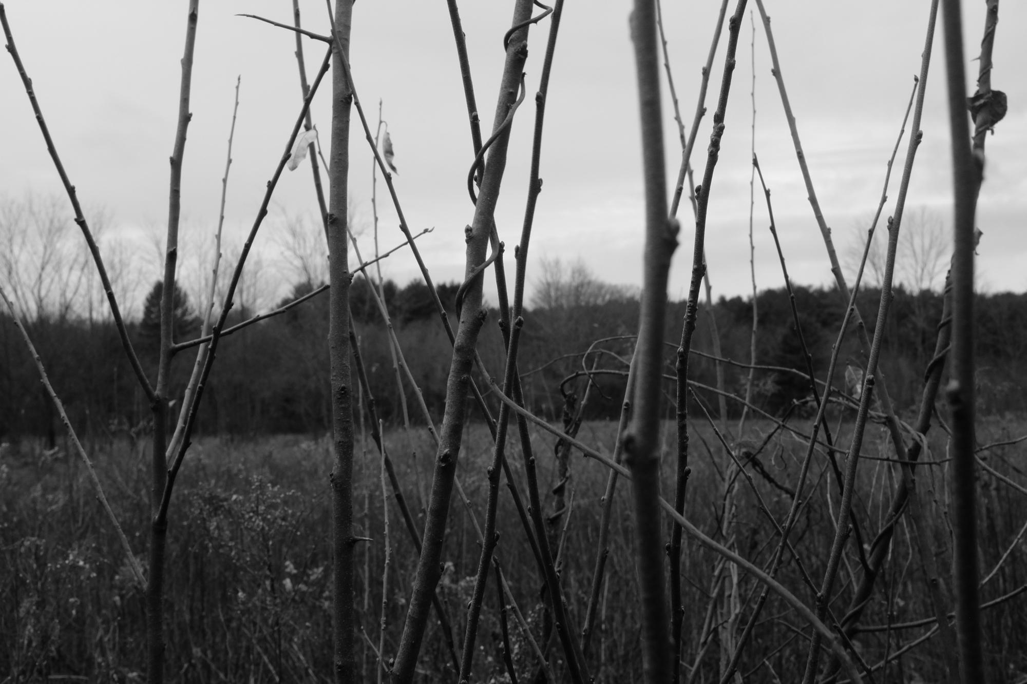amherstfields-38.jpg