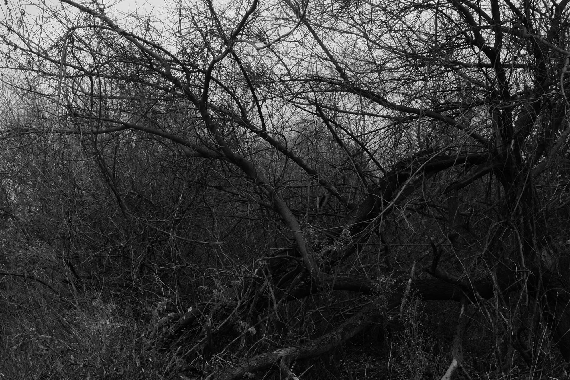 amherstfields-37.jpg