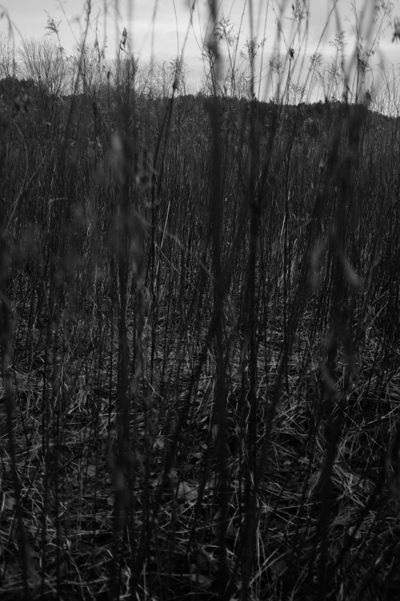 amherstfields-32.jpg