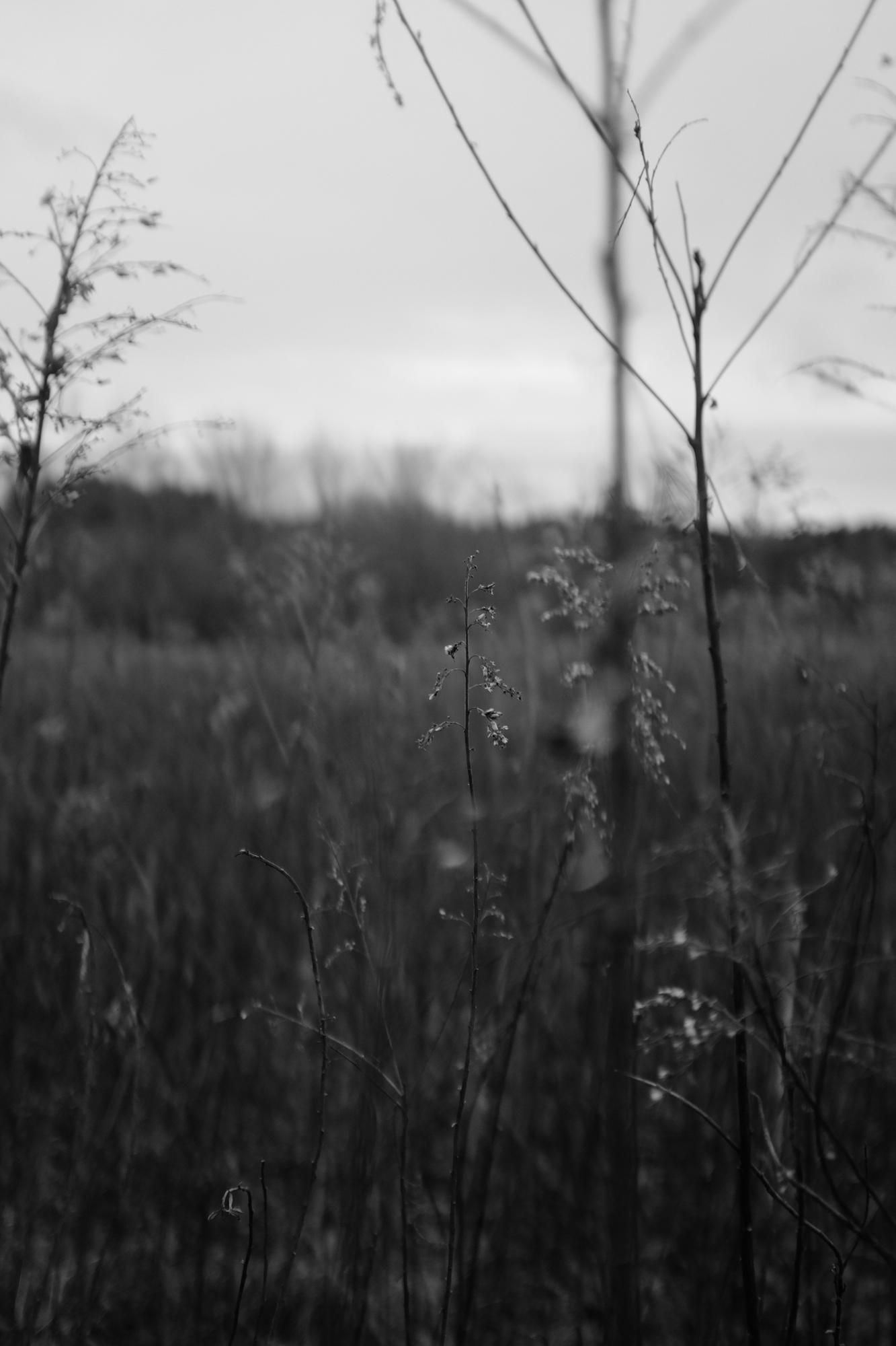 amherstfields-31.jpg