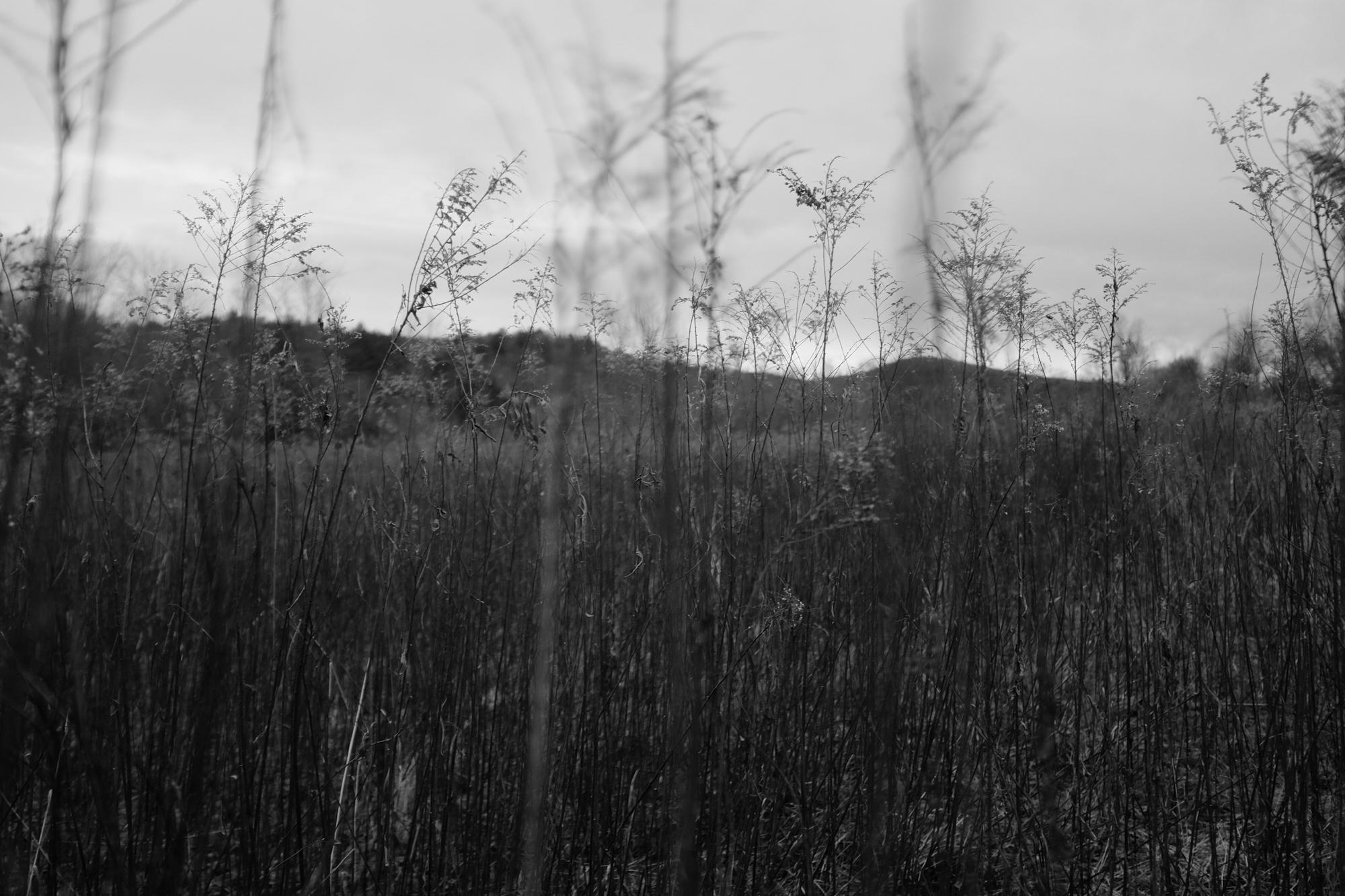 amherstfields-29.jpg