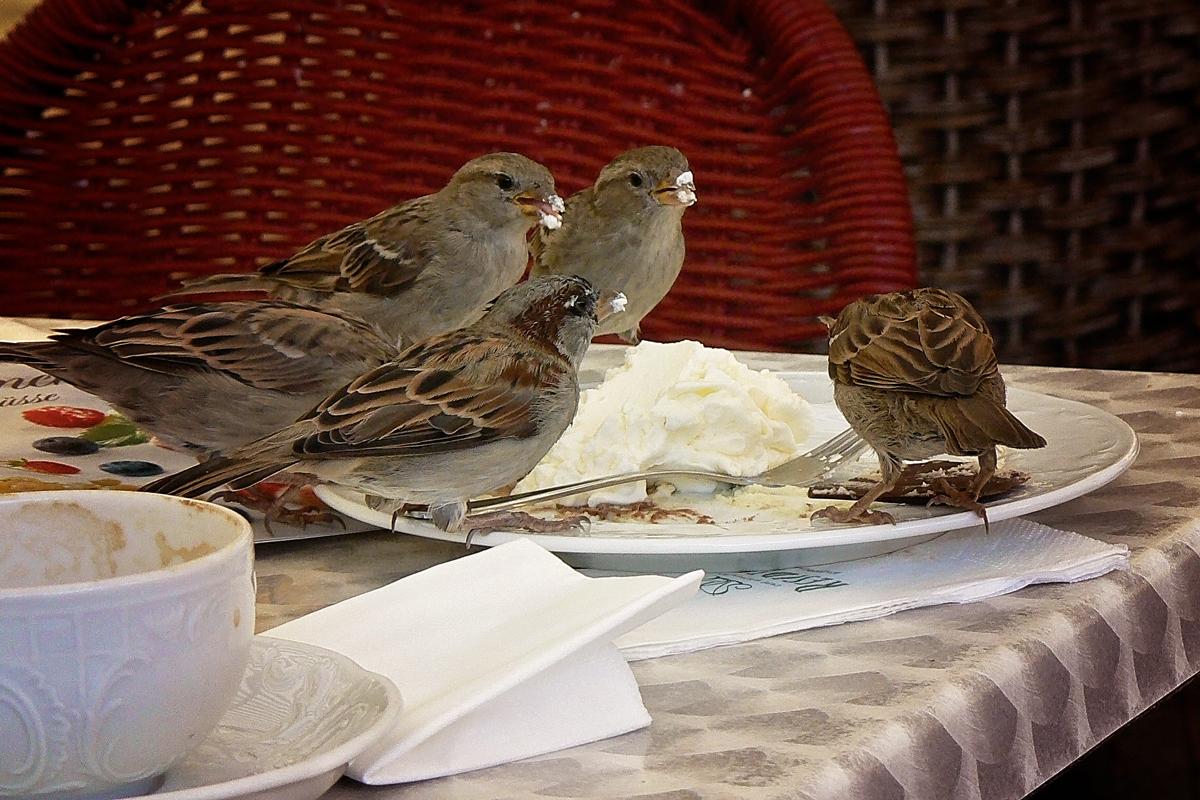 vrabce.jpg