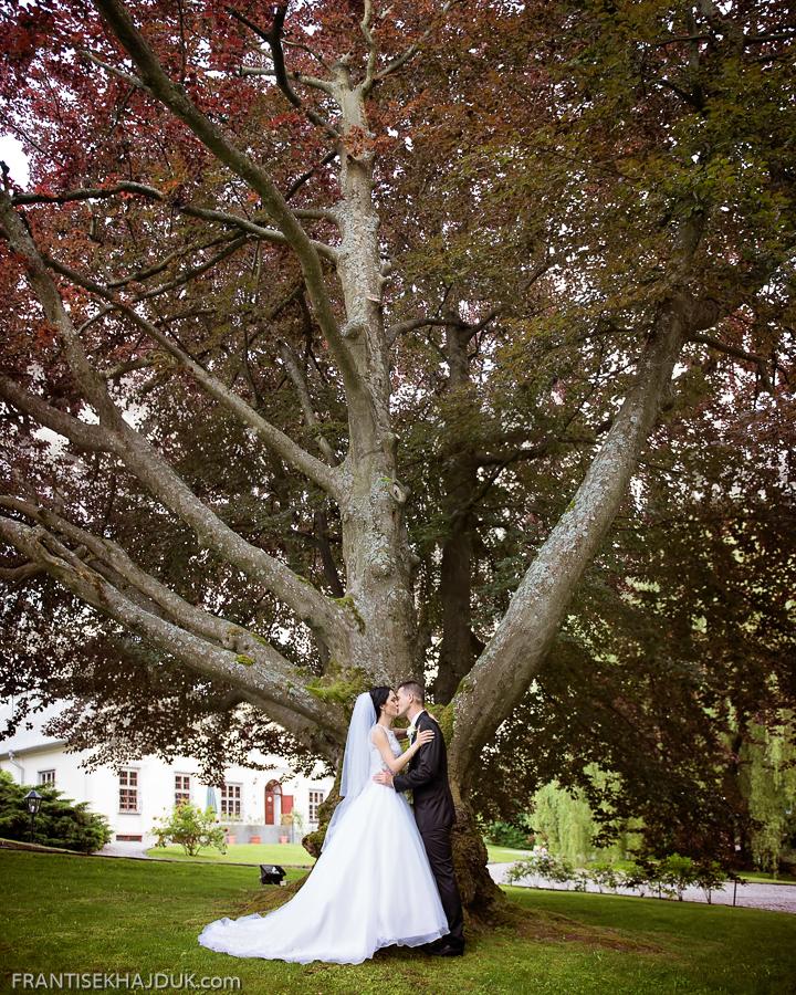 Tree_Panorama1.jpg