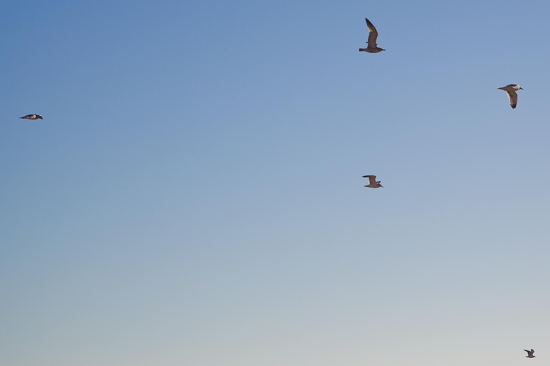 birds in santa cruz ca .jpg