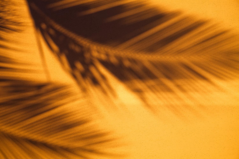 palm-tree-shadow-travel-photographer.jpg