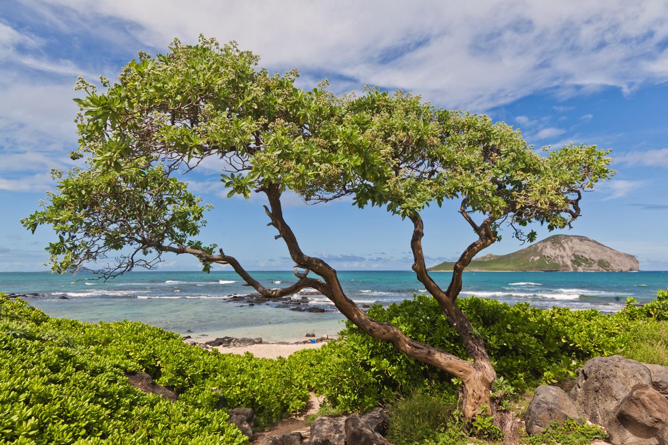 tree-on-hawaiian-beach-travel-photographer.jpg