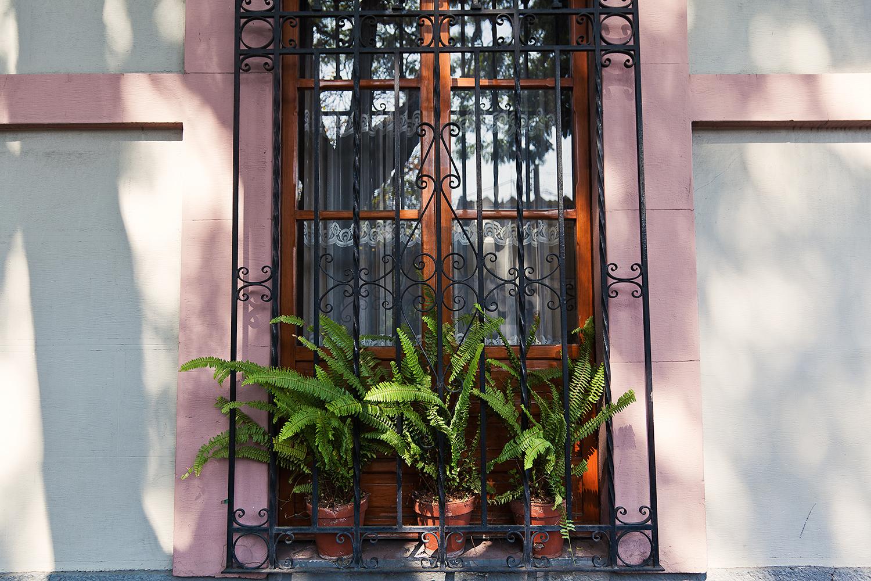 mexico city plants coyoacan.jpg