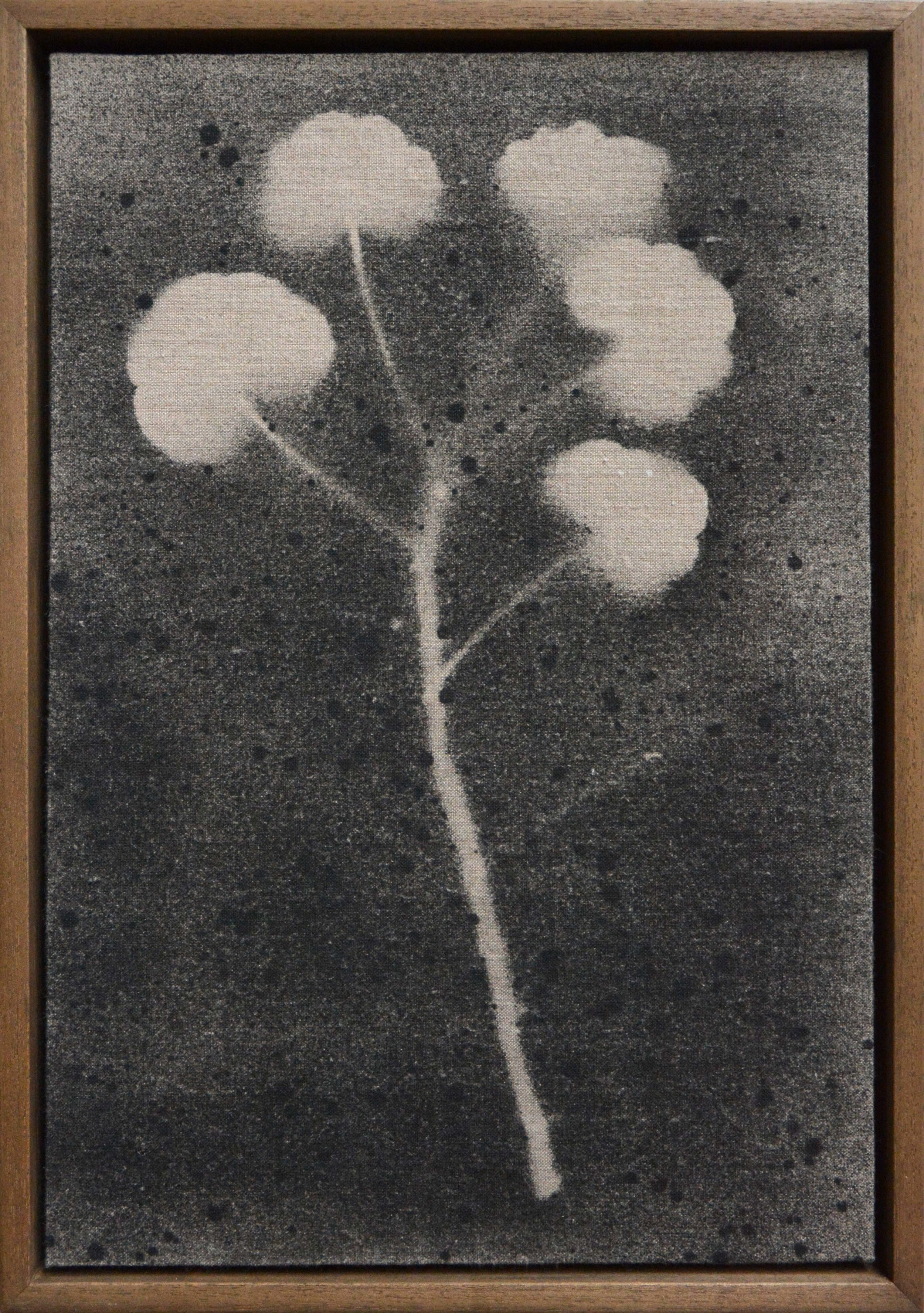 Trace-Pelargonium sml.jpg