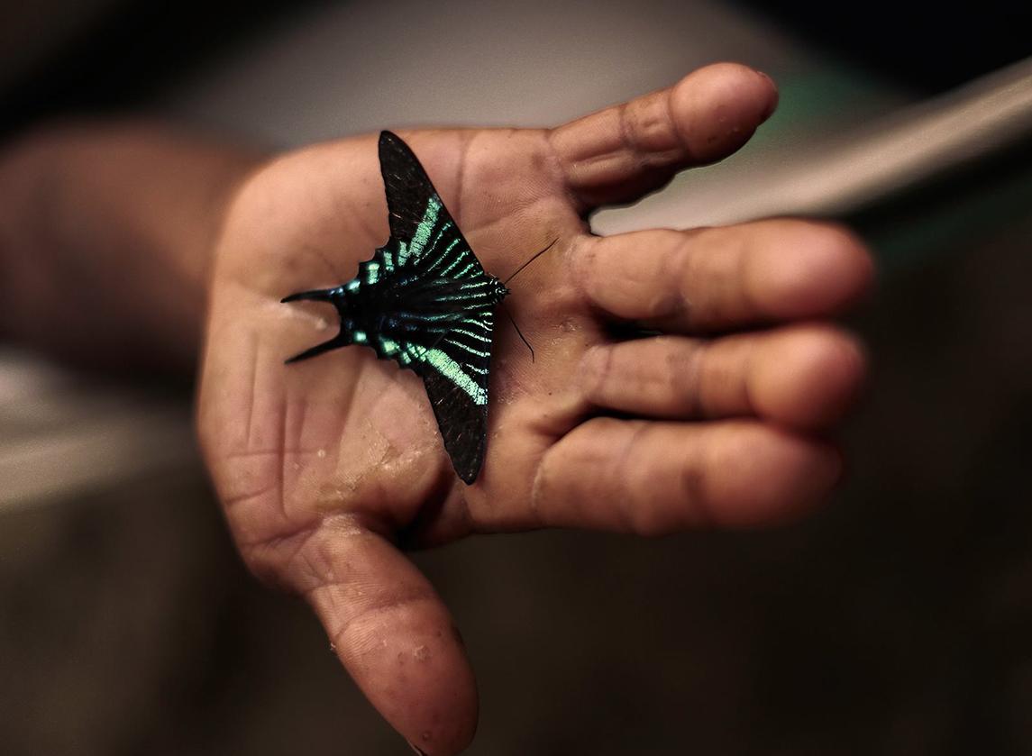 mano mariposa chaman.jpg