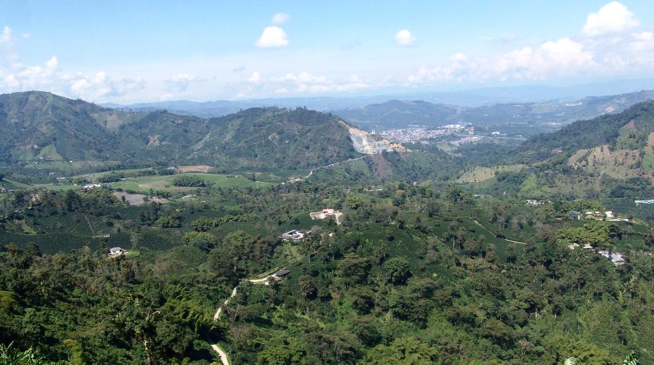 High Altitude Coffee Farm