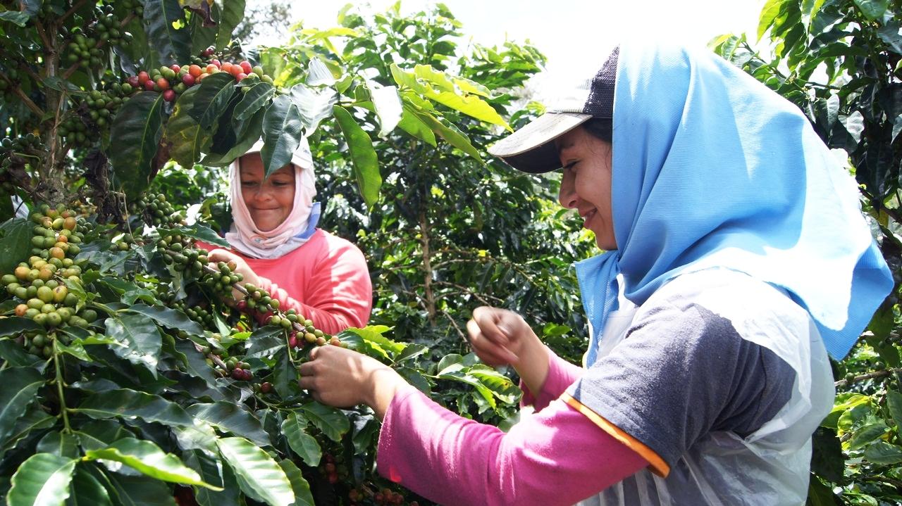 Happy High Altitude Coffee Farmers