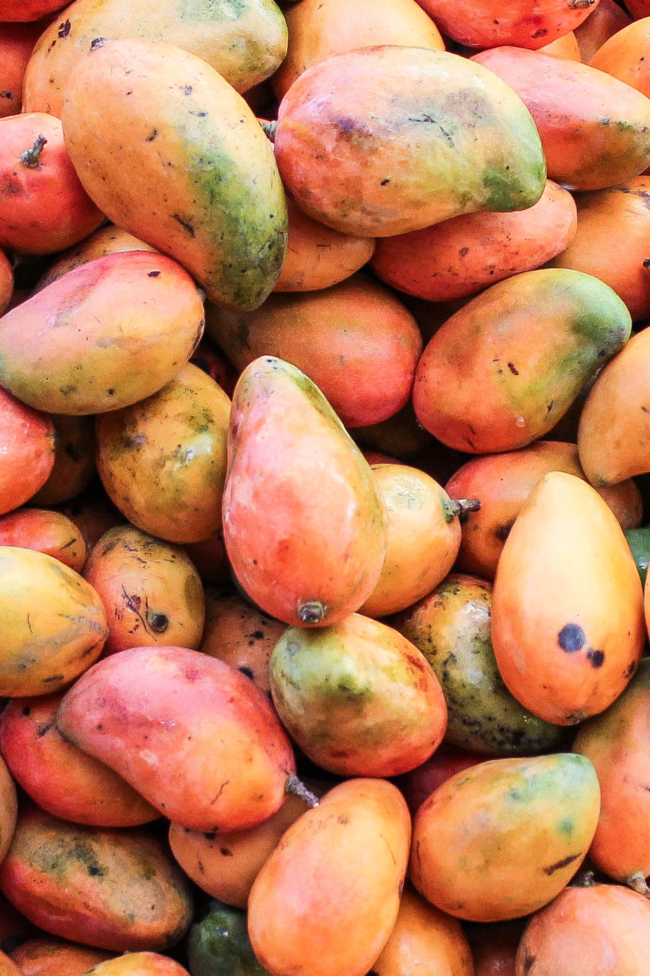 Mangos || OAXACA CITY, MEXICO FOOD GUIDE || creamandhoney.ca