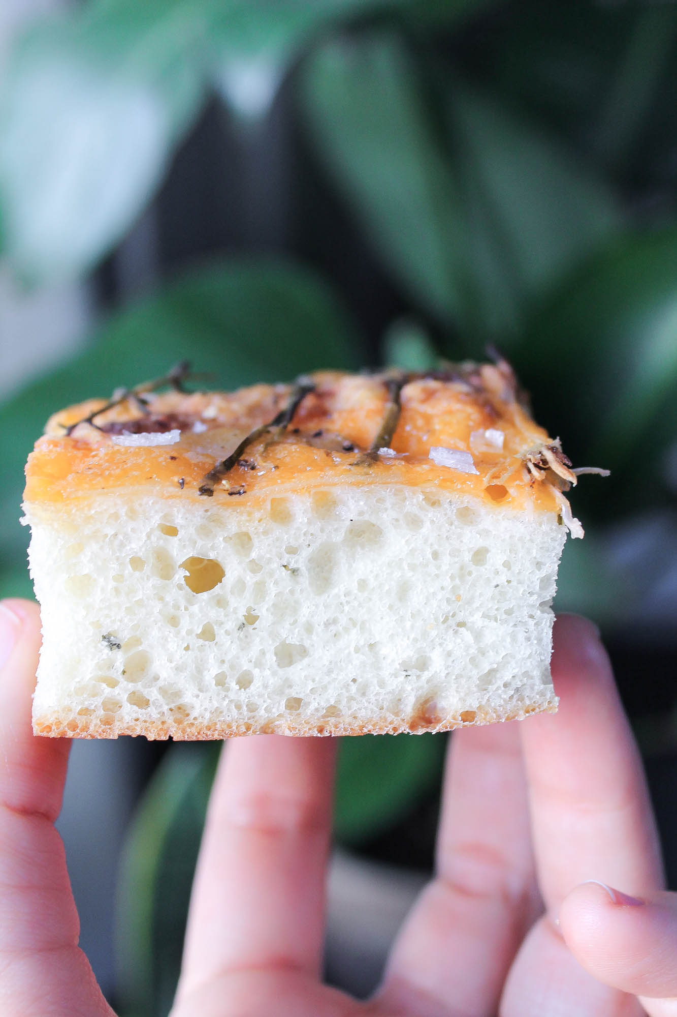 Potato, Cheddar + Onion Focaccia || Simple + easy homemade bread that will impress your guests. Perfect for Christmas or the holidays and easily made dairy free without the cheese. || creamandhoney.ca