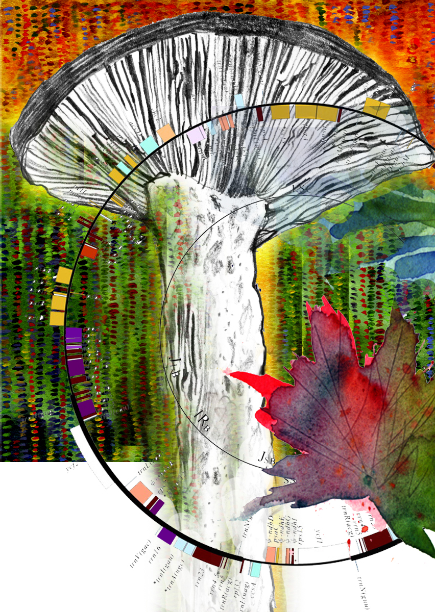 Mushroom&Genome DeCordova copy 2.jpg