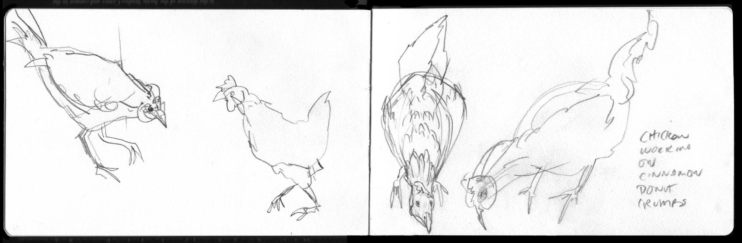 Fiedler FarmSchl Chickens.jpg