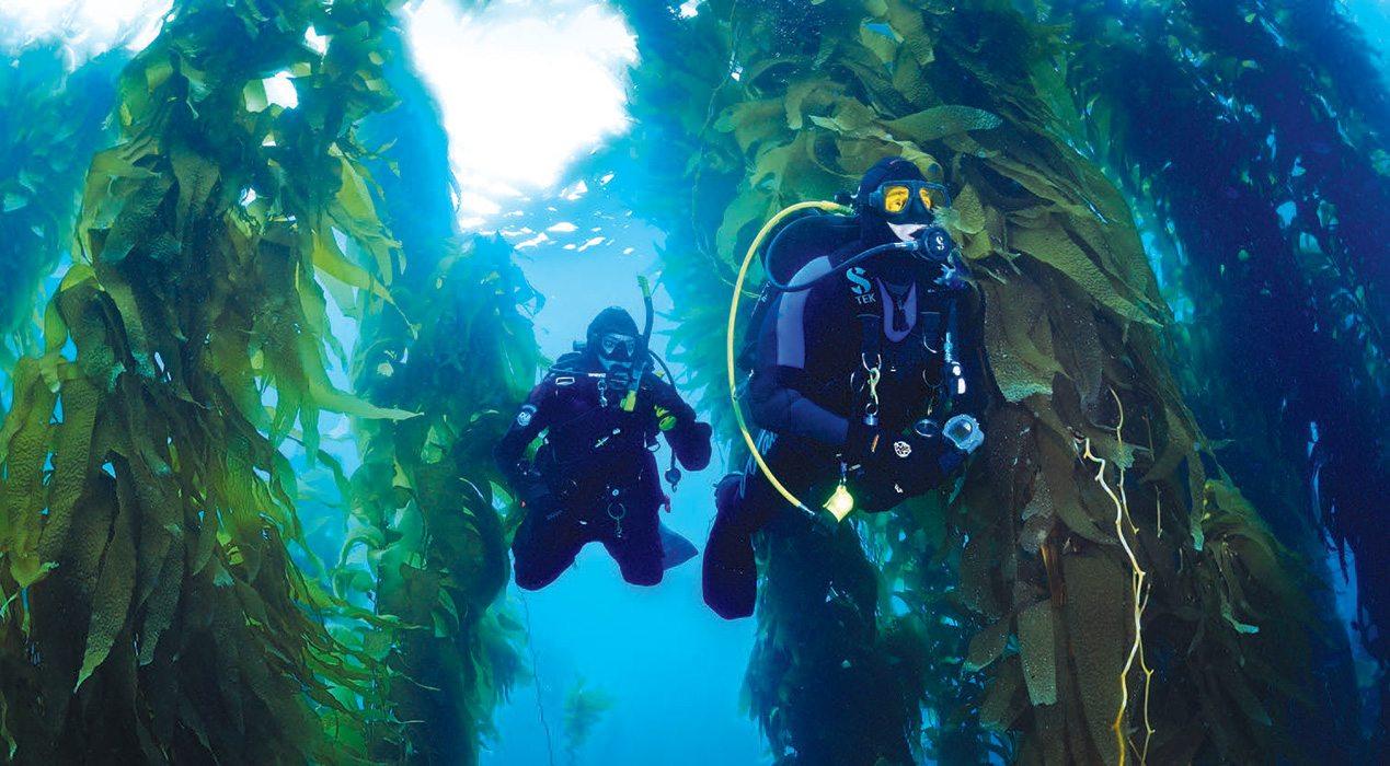 Kelp-diving-3.jpg
