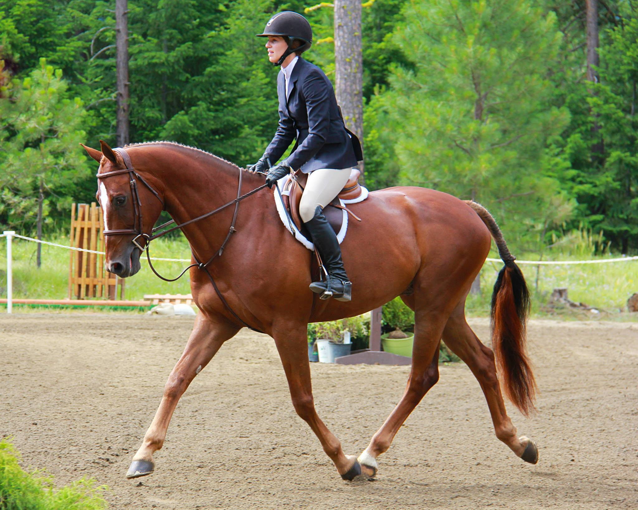- Our high end-sales program specializes in finding every horse an appropriate and prosperous new home.