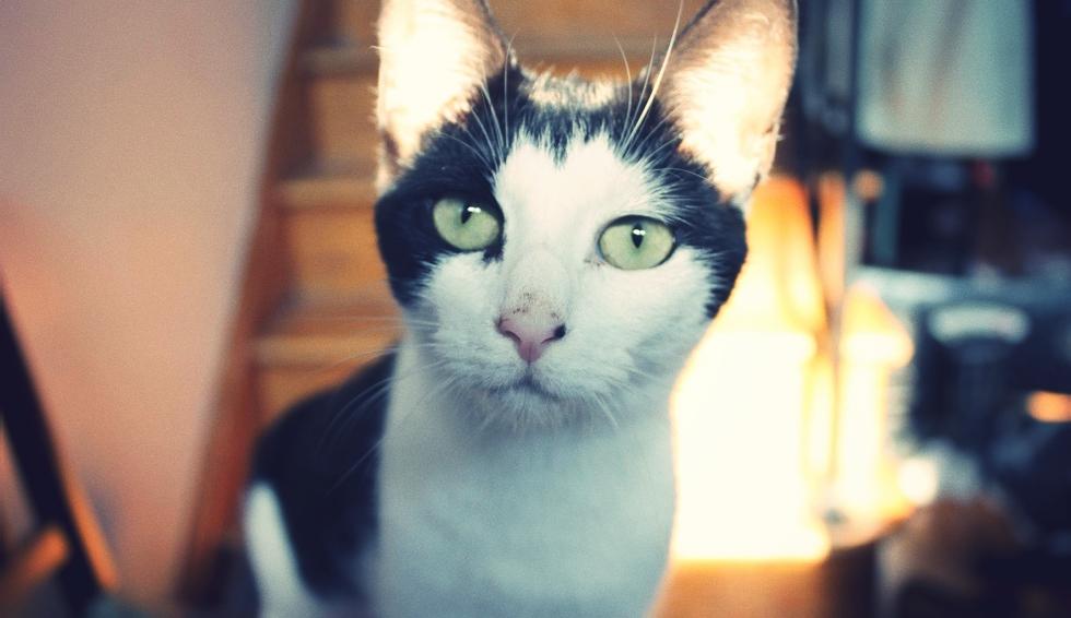 cats1_effected.jpg