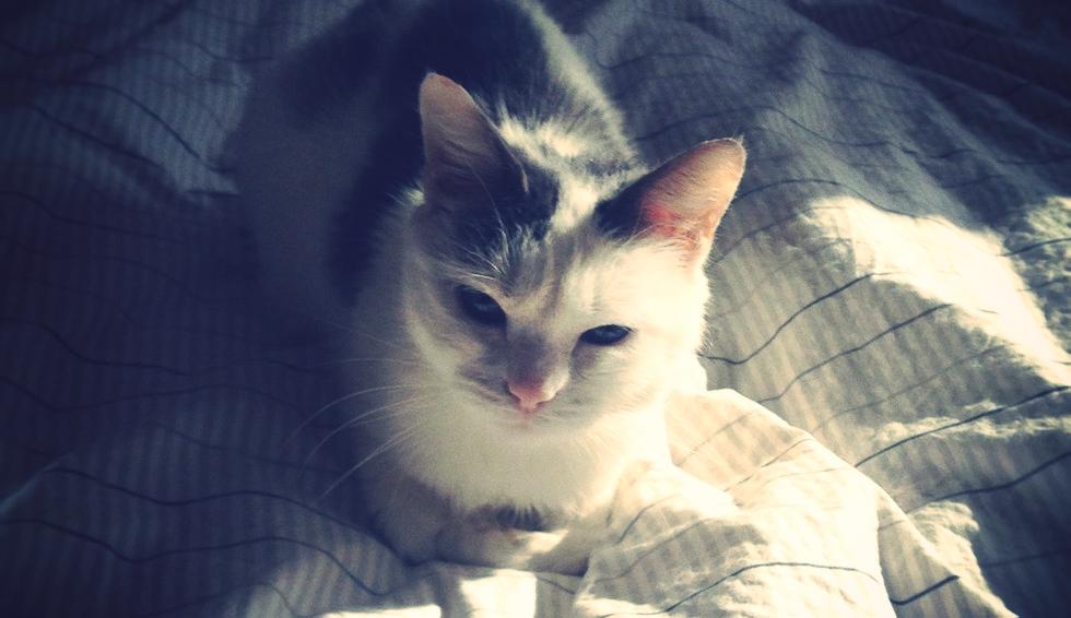 cats3_effected.jpg
