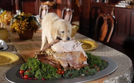 naughty_thanksgiving_puppy_wallpaper_2560x1600_wallpaperhere.jpeg