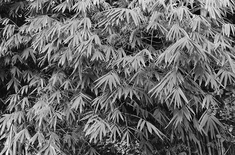 68_palmweb.jpg