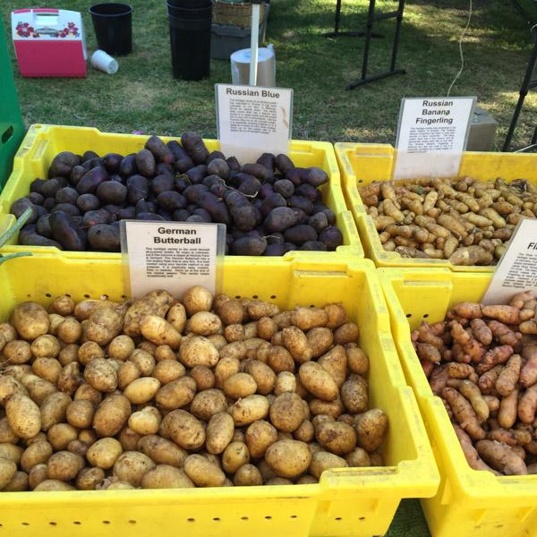 Low-FODMAP-Vegetables-Farmers-Market-5.jpg