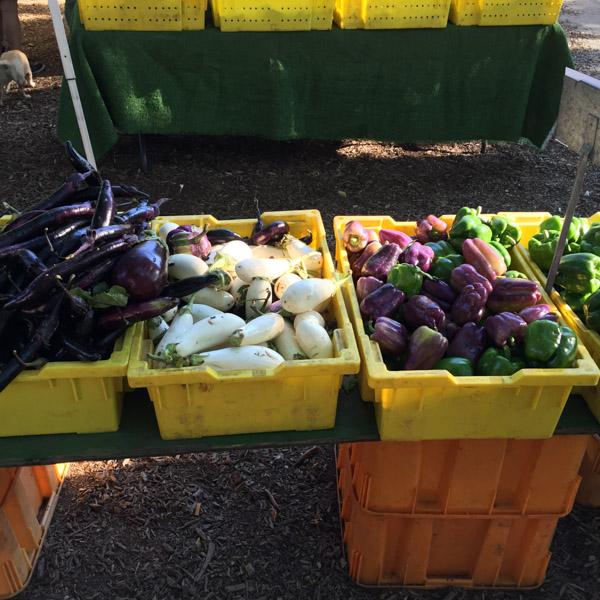 Low-FODMAP-Vegetables-Farmers-Market-9.jpg