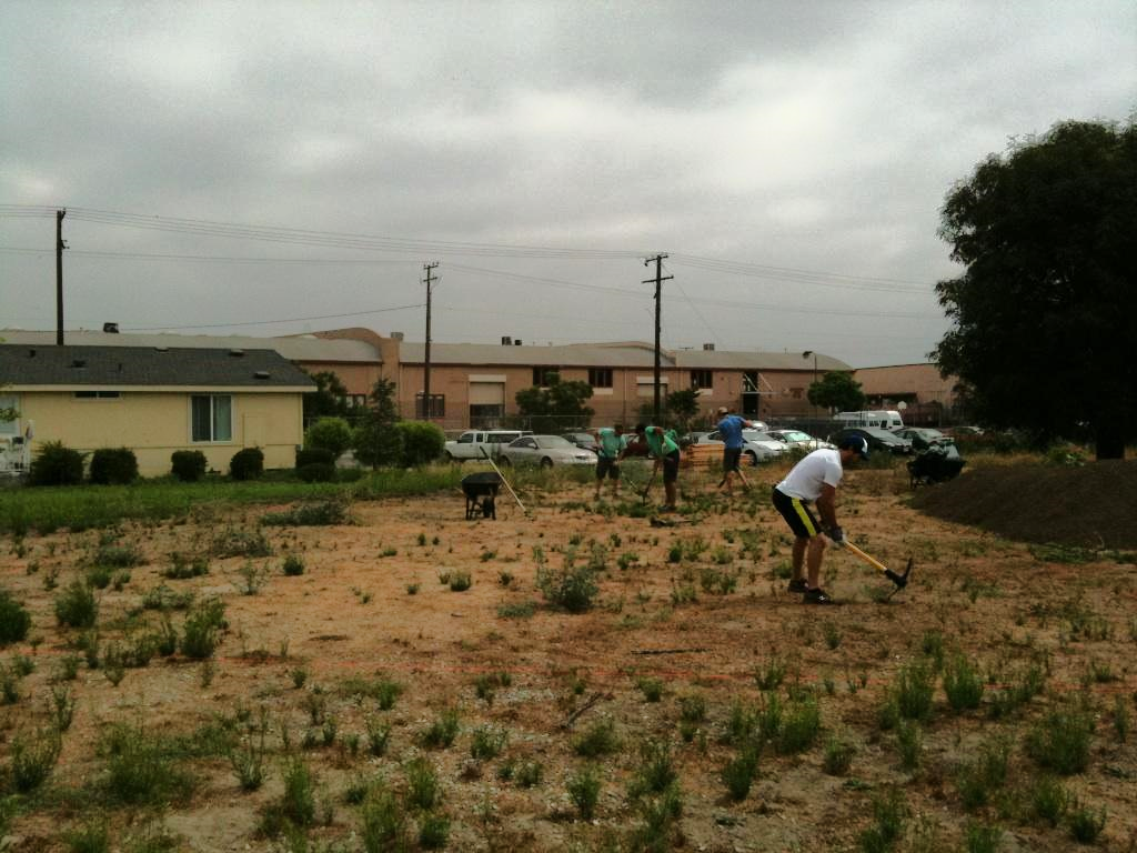 The site in August 2011 on the day the raised beds were built.