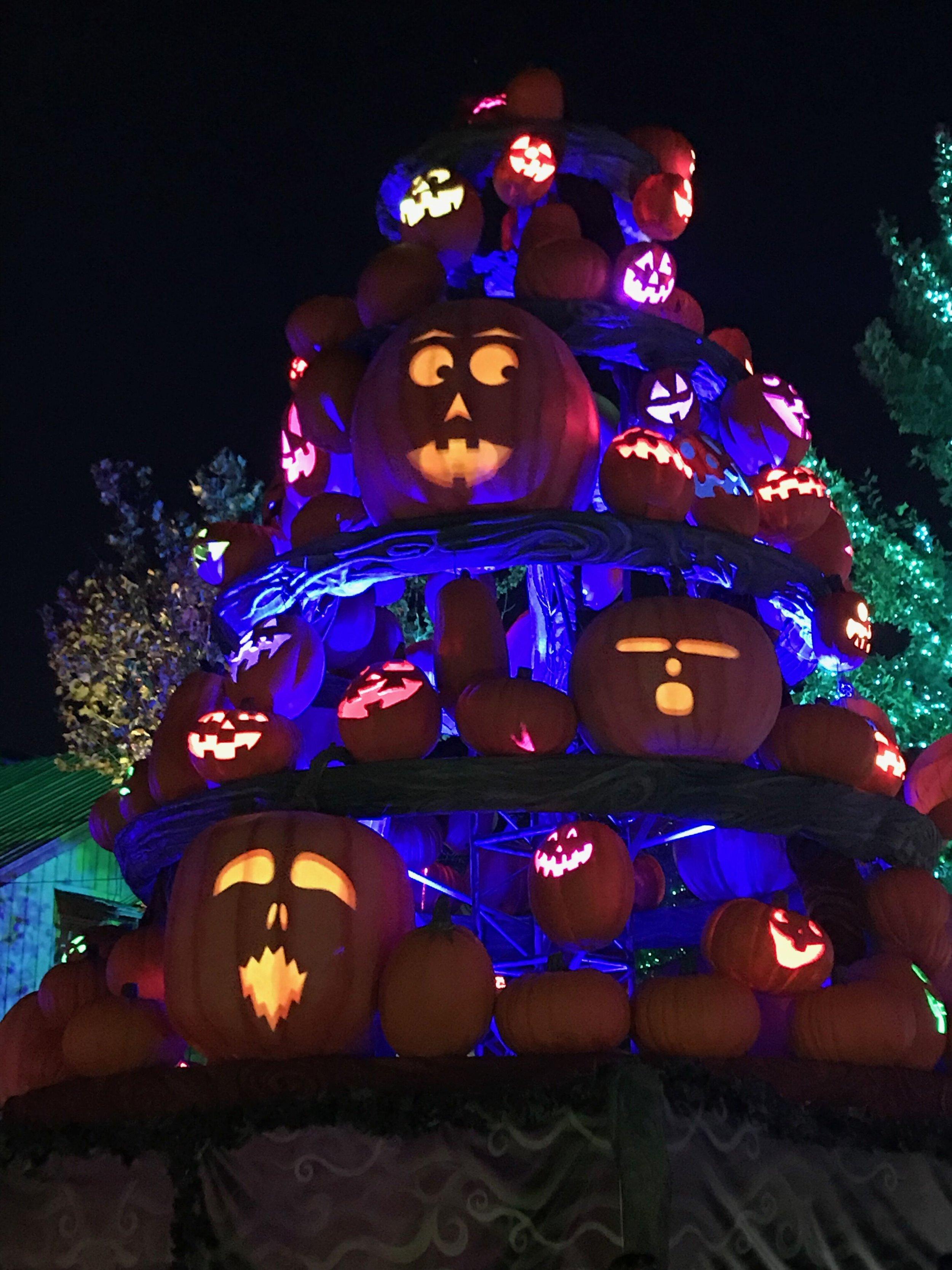 pumpkin tree.jpeg