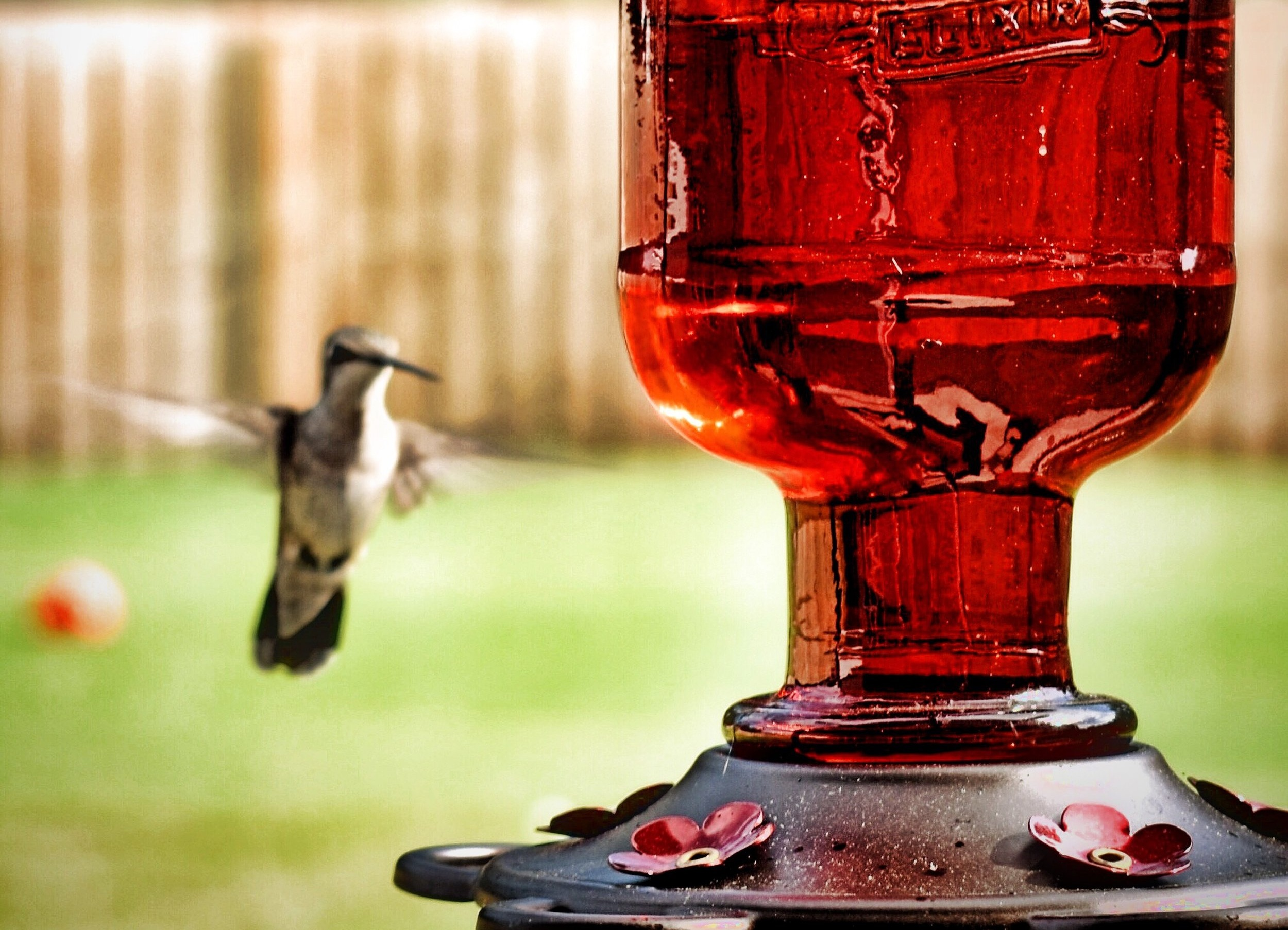 Best Hummingbird Feeders   Disclaimer: There are affiliate links in this post. This means that at no cost to you, I will receive a small commission if you purchase through my link. I will only ever promote the products and services that I trust and 100% recommend. You may read my full  disclosure policy  for more information. Thanks for supporting my business in this way.