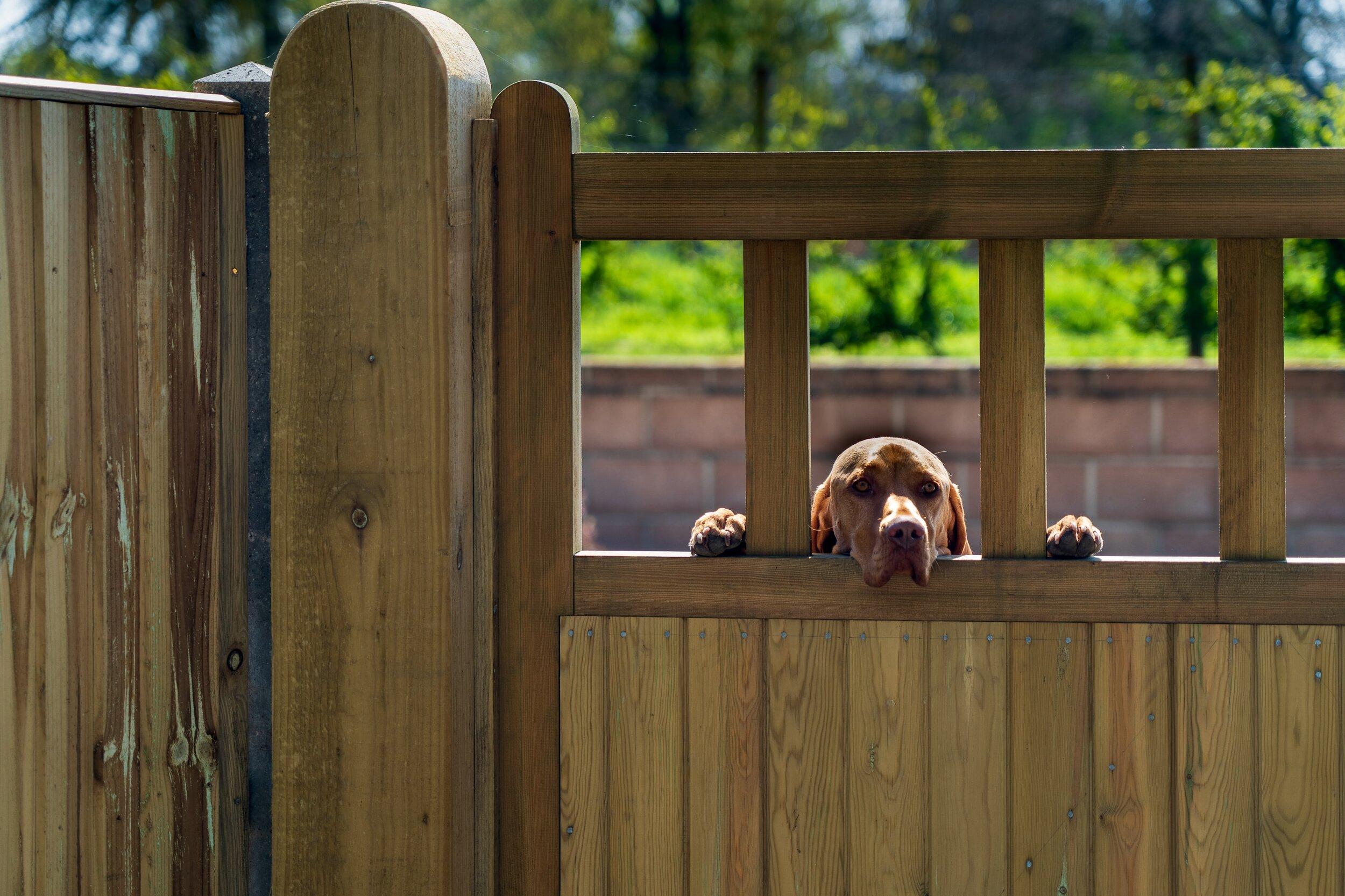 木栅栏门.jpeg
