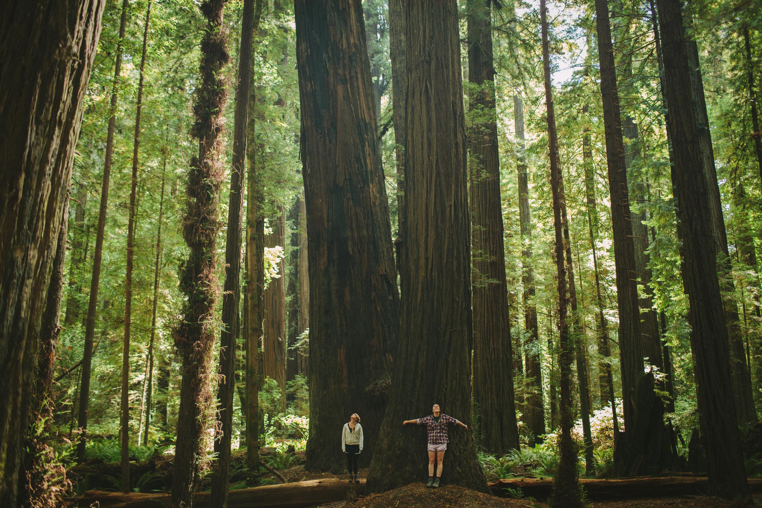 redwoods-62.jpg
