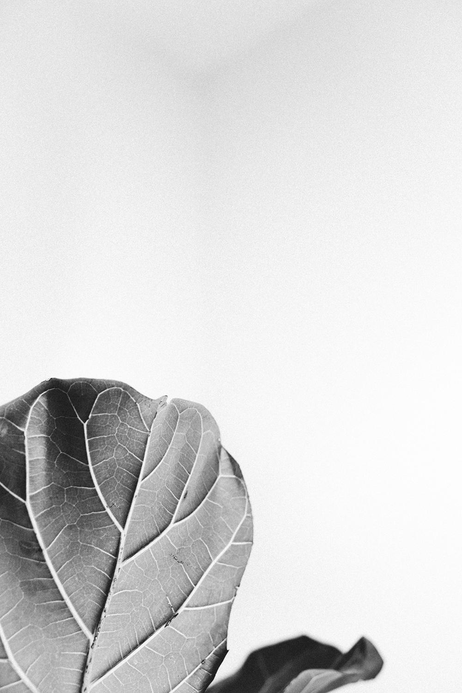 Mikaela Hamilton- Lauren Brand-43.jpg