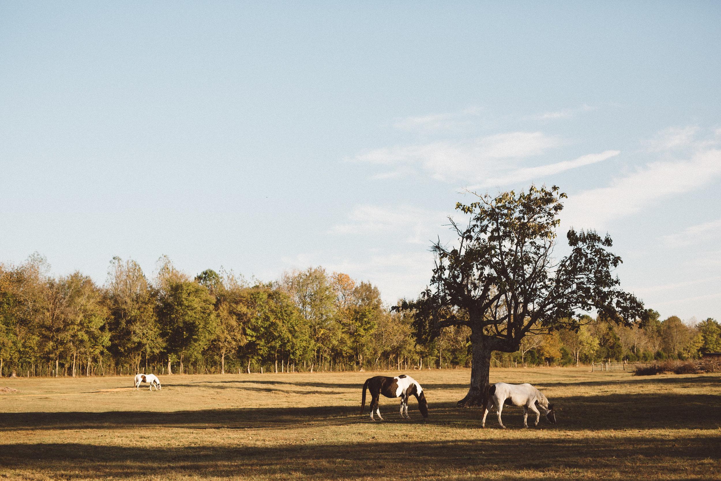 Mikaela Hamilton-Stillwaters Farm-74.jpg