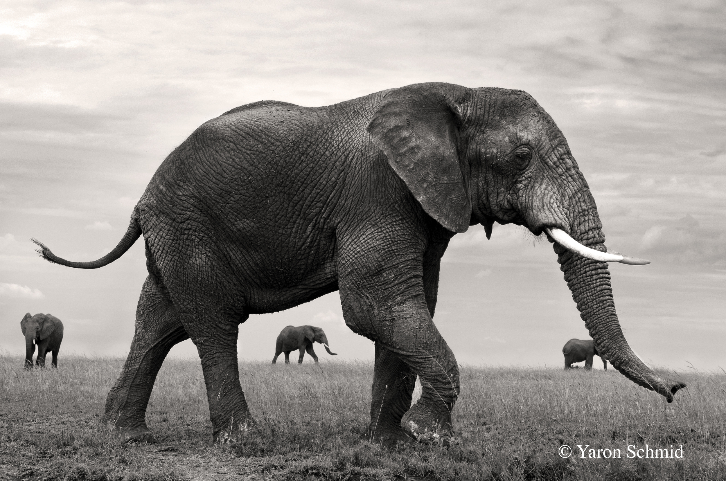 """Near and Far"" photographed in Serengeti, Tanzania 2014"