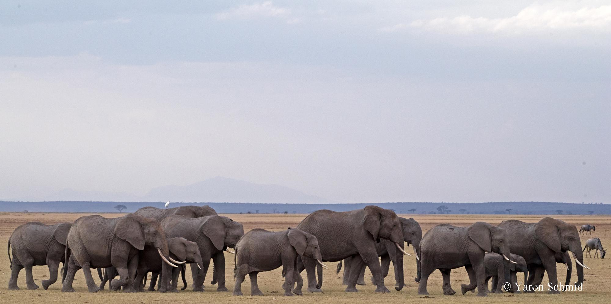 Postcard from Amboseli