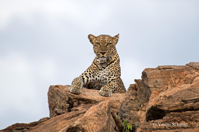 Queen of the Rocks