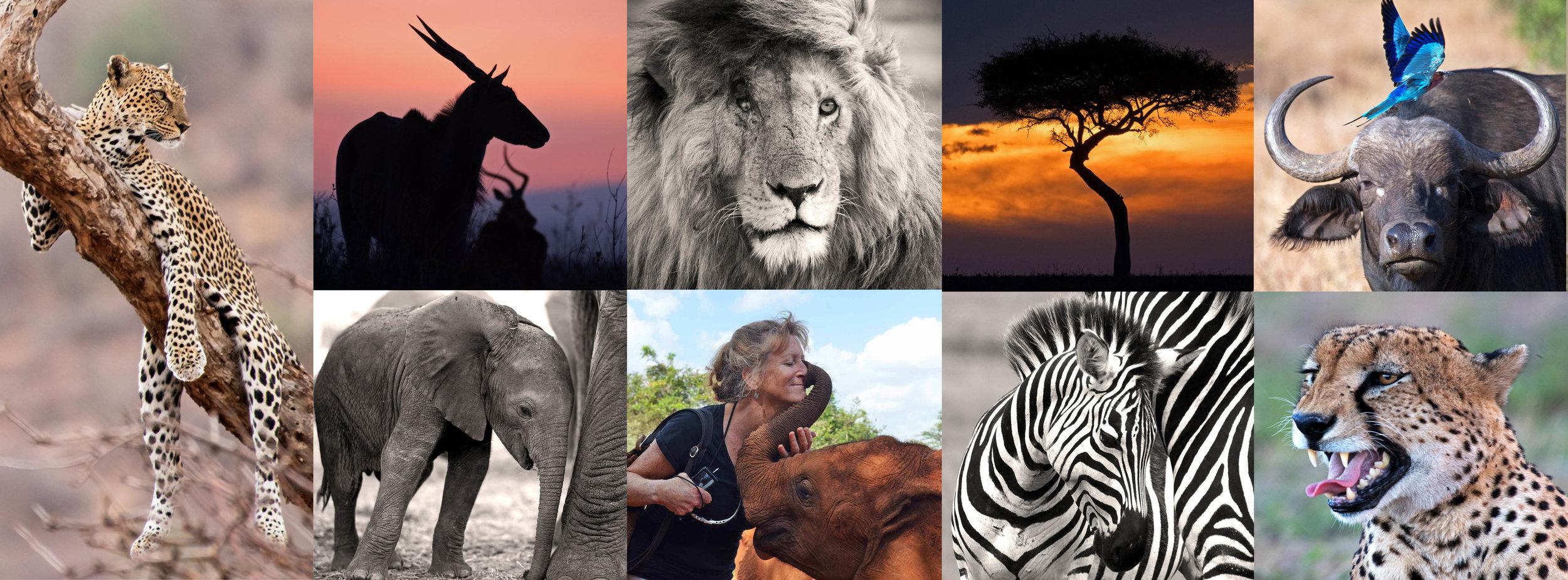 Kenya Great Migration Sheldrick Safari