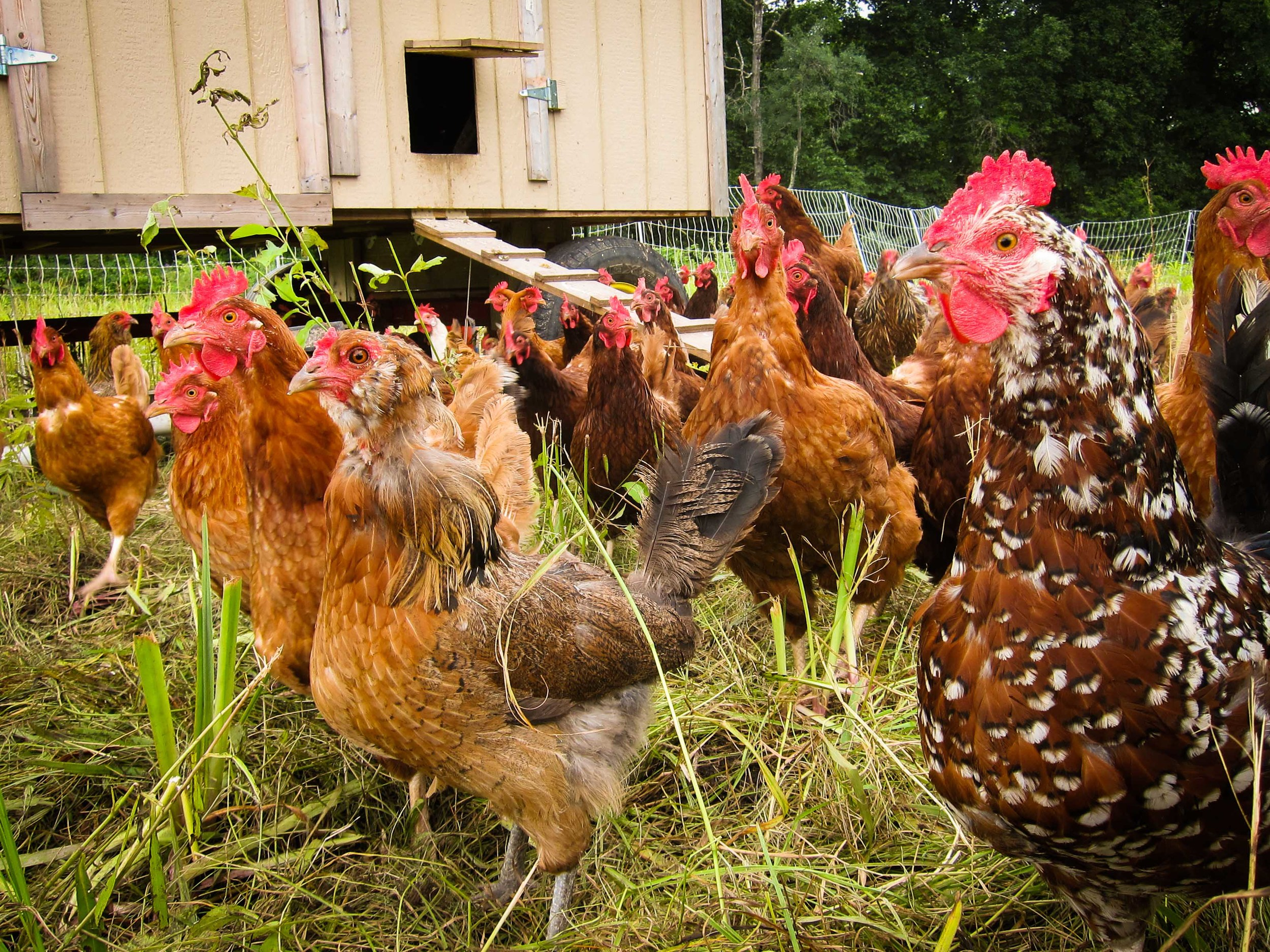 CTPoultry-8026.jpg
