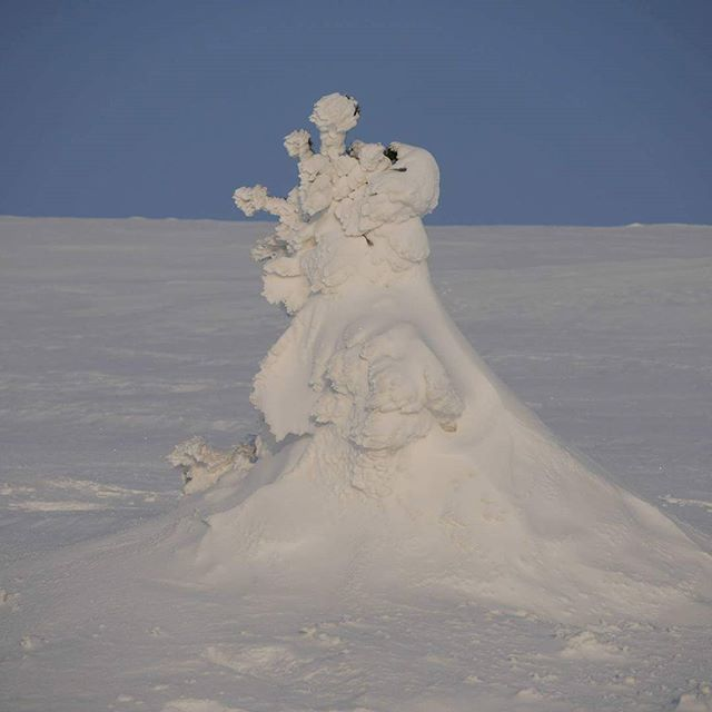While snowshoeing on Pallas we saw the king of the fells, with his wonky crown, benign smile, regal profile and flowing cape. #pallasylläsnationalpark #pallas #snowking #snowsculpture #winterwonderland #finnishlapland