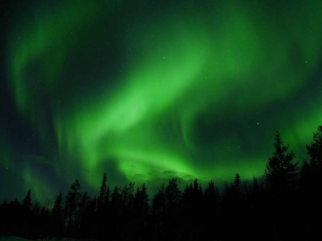 a different kind of forest fire #Auroras #finnishlapland #northernlights #forestfires #alienskies