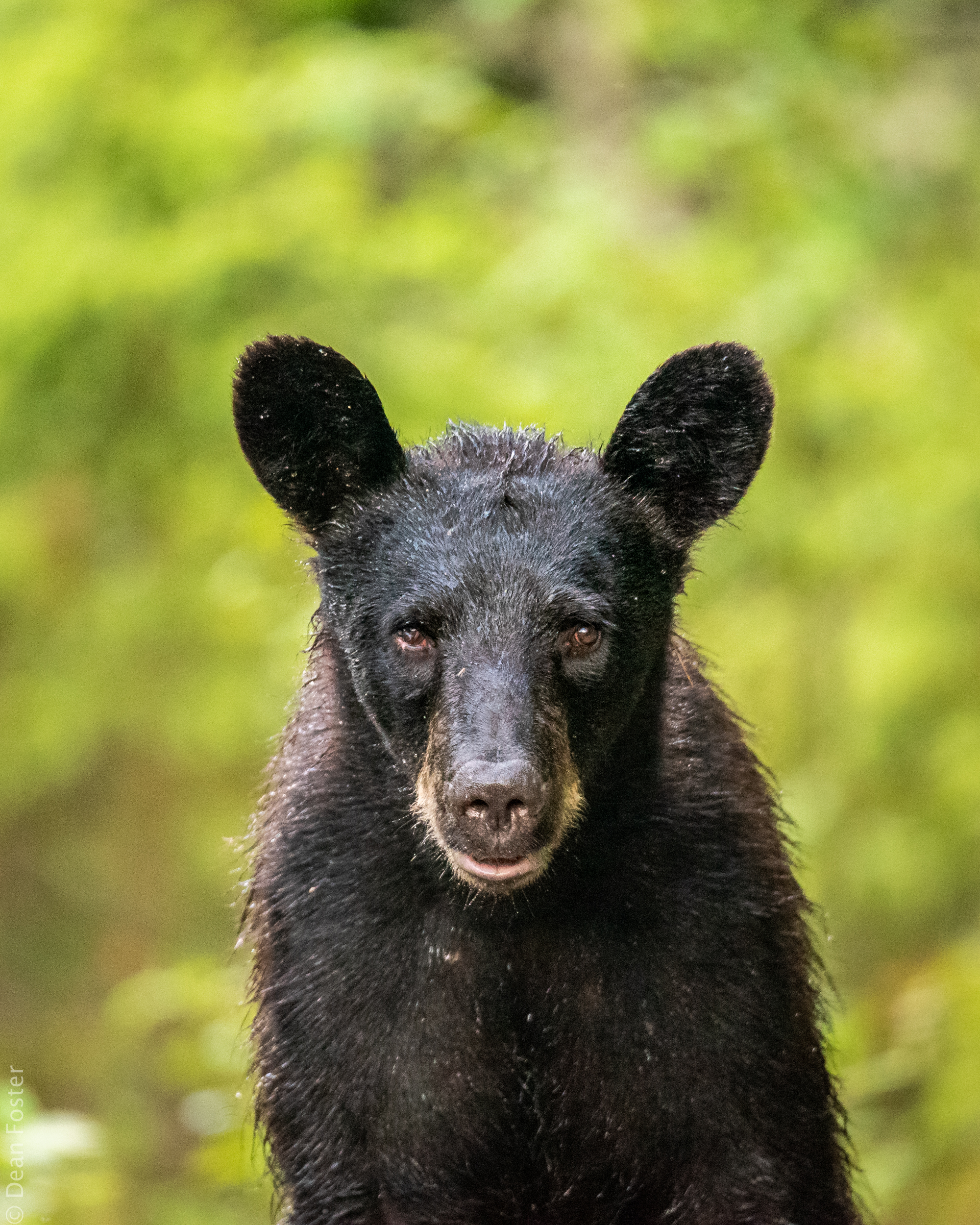 This young black bear wasn't too shy and was more than