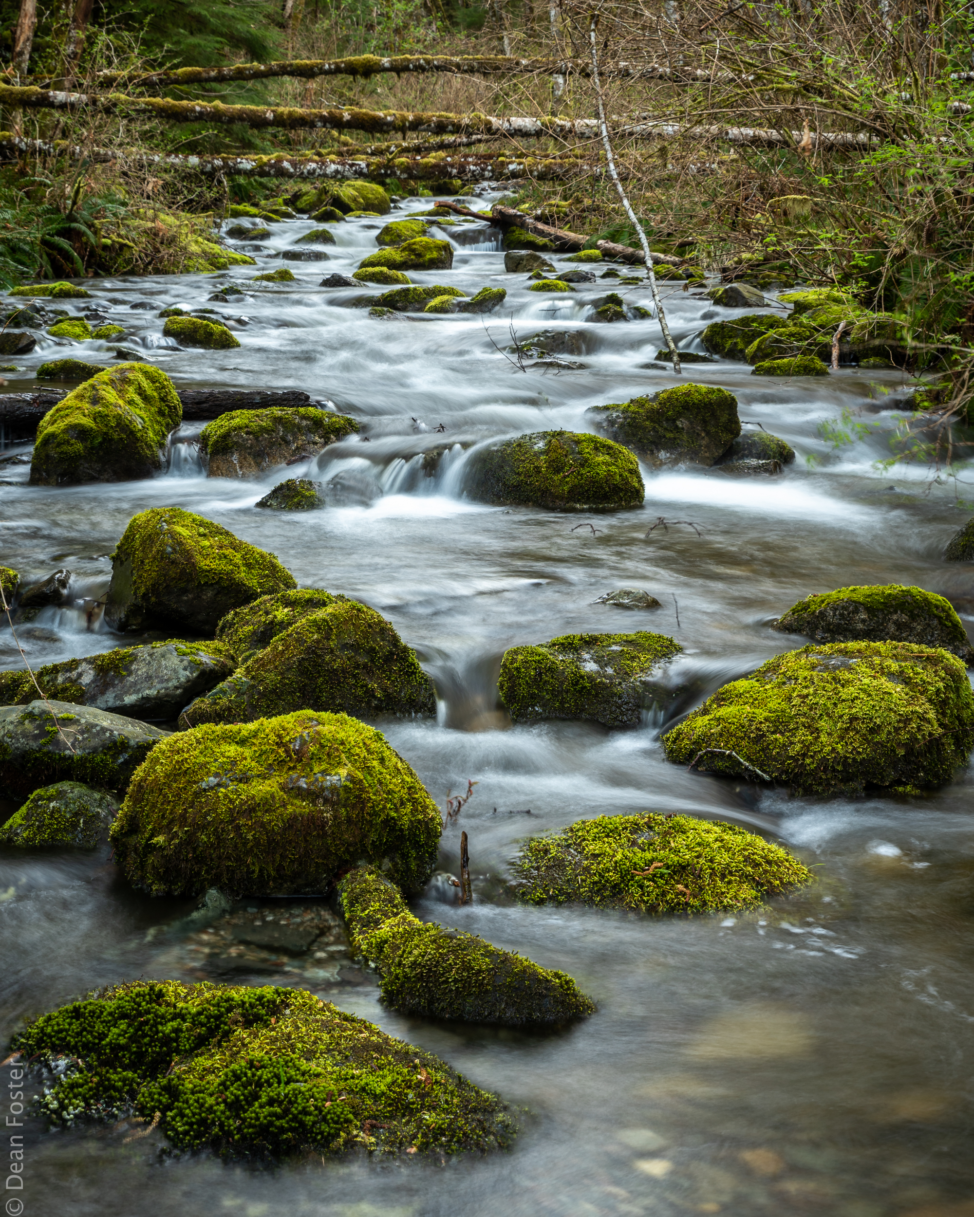 A small creek meanders through the moss covered rocks on Quadra Island