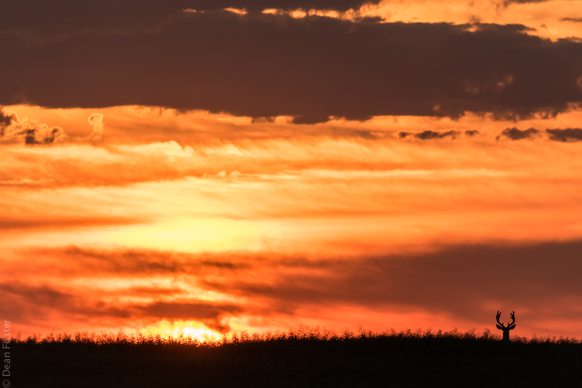 Drum-Sunset-1885.jpg