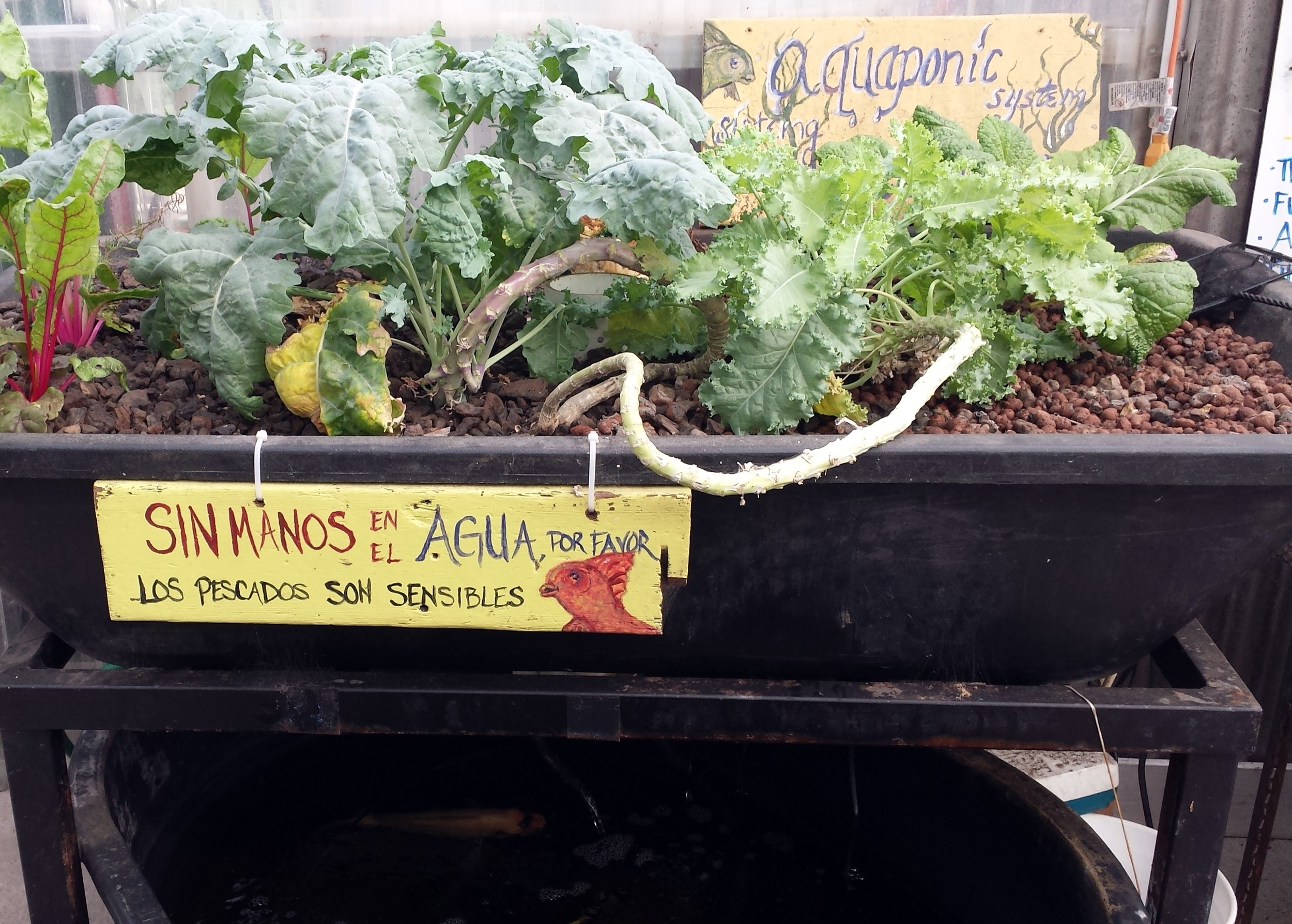 A small demonstration of aquaponic farming: a closed system with fish and plants.