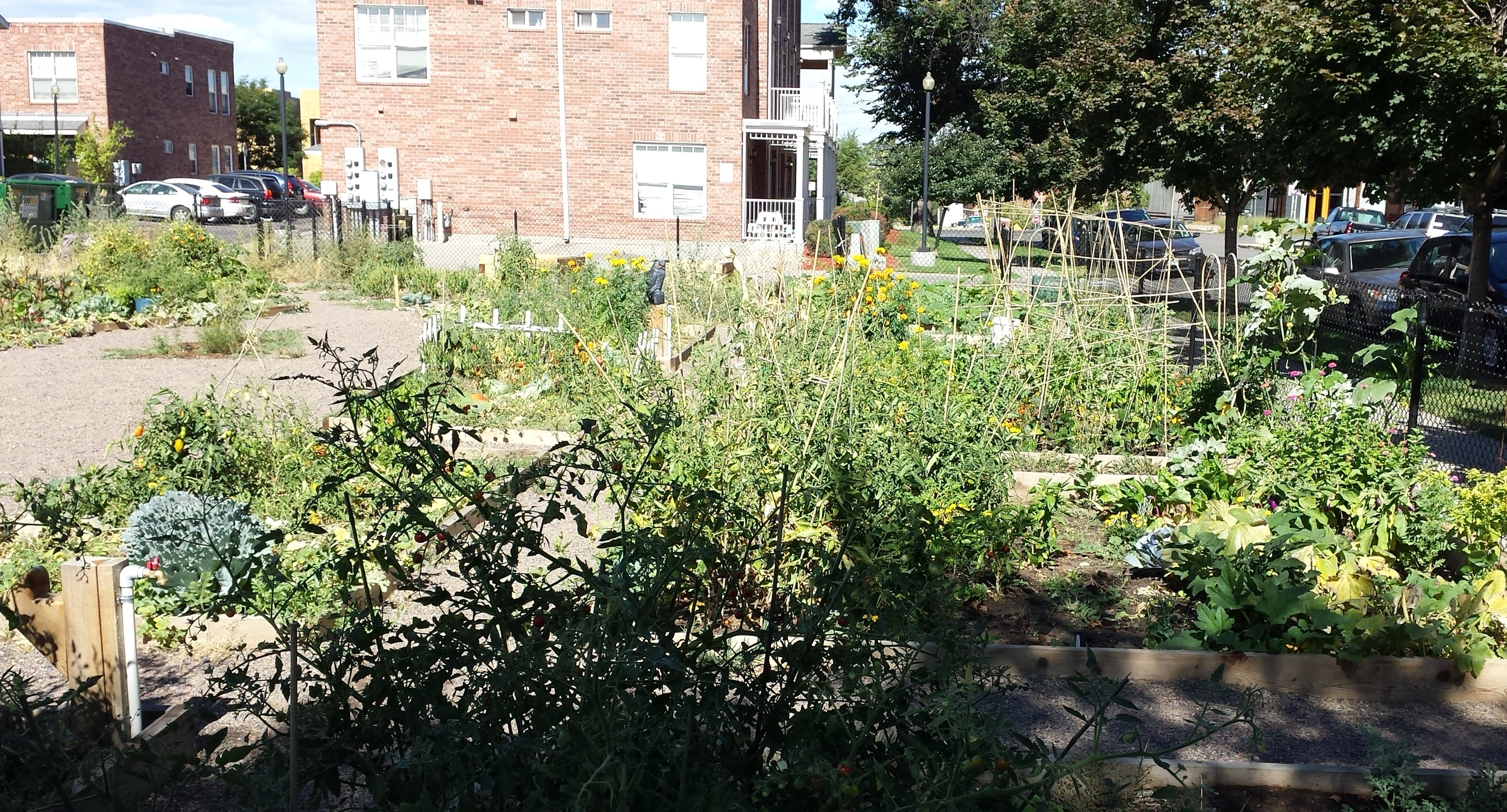 A vibrant community garden run by Denver Urban Gardens.