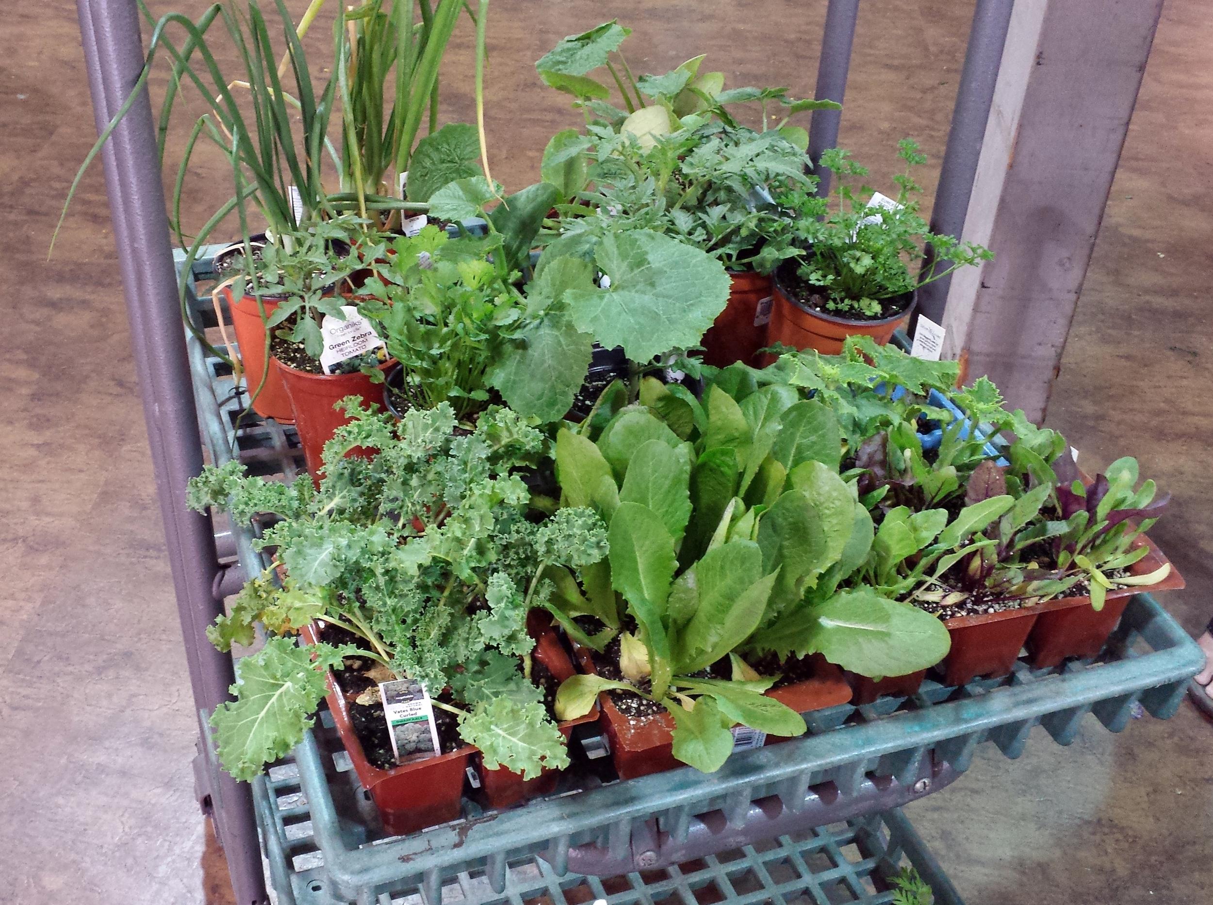 Preparing for a new vegetable garden
